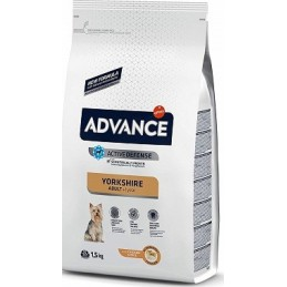 Advance Adult Yorkshire Terrier