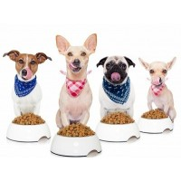 Šunų maistas