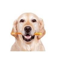 Dantų ir burnos priežiūra